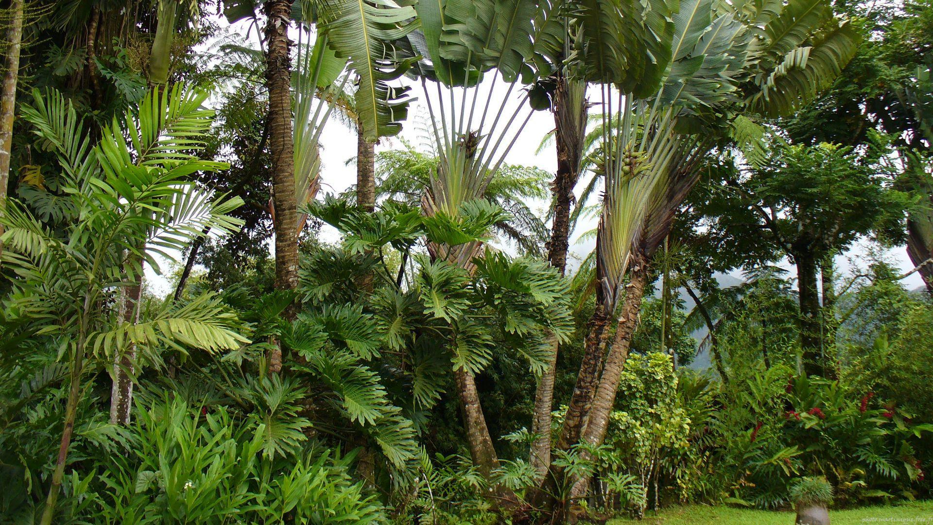 plante tropicale jardin