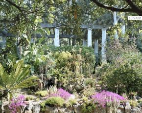 Le domaine du Rayol, le jardin desMéditerranées