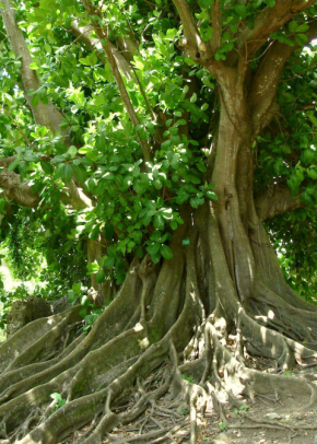 « Essentiel paysage » : l'herbier imaginaire d'AiméCésaire