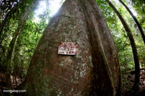 Indonésie : l'huile de palme, la pâte à papier sont-elles des menaces pour la forêt?