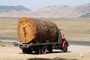 Peu traité dans l'histoire de l'Afrique coloniale : la déforestation duMaghreb