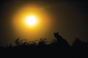 The sun setting in the Kgalagadi Transfrontier Park
