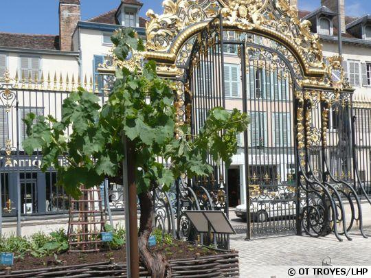 jardin-plantes-medicinales-troyes-540x405