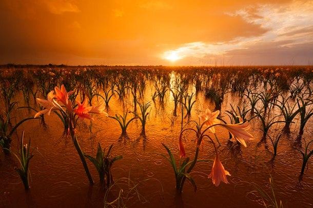 admirez-le-magnifique-desert-de-namibie-grace-a-ces-fantastiques-photographies44-1