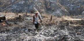 La Birmanie abat en masse ses précieusesforêts