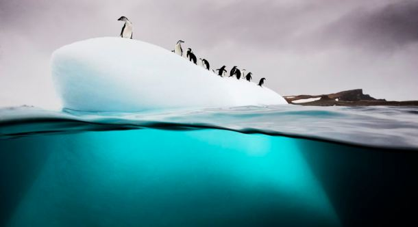 Chinstrap and gentoo penguins, Danko Island, Antarctica