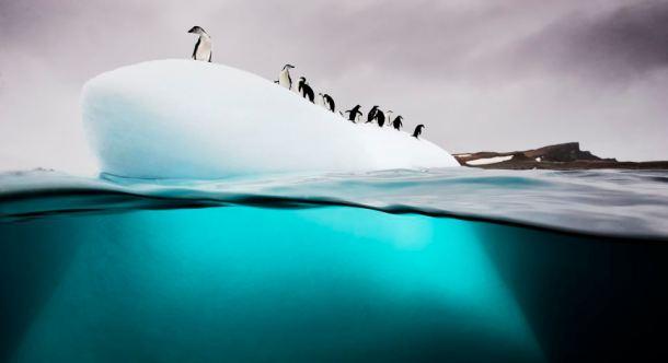 Chinstrap and gentoo penguins, Danko Island, Antarctica