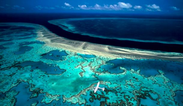 Hook and Hardy Reef, Great Barrier Reef