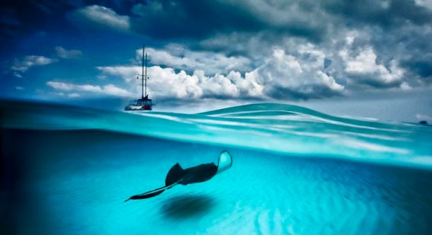 Stingray and Sailboat