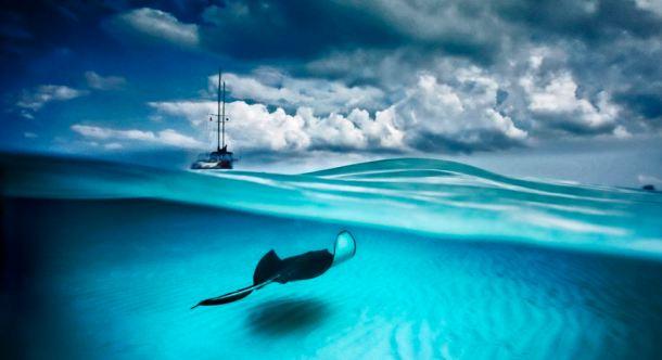 Stingray and Sailboat