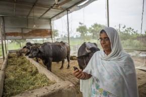 Des villages climatiquement rationnels en Inde, Népal etBangladesh