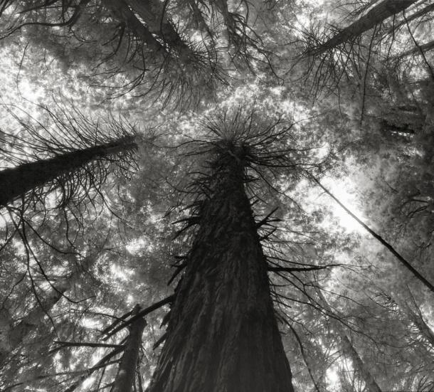 kings_canyon_sequoias_copy