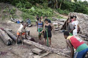 Madagascar : Le trafic du bois quisaigne