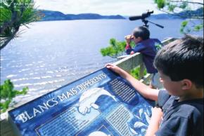 Québec : les bélugas ont gagné face auxpétroliers