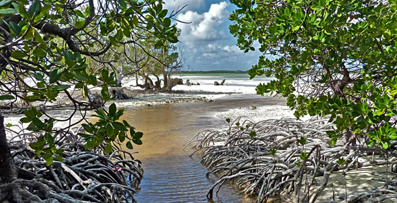 europa-fromard-annee-mangrove