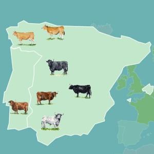 carte_bovins_espagne_portugal