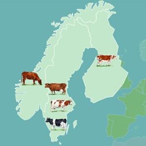 carte_bovins_scandinavie