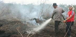 Huile de palme: l'Indonésie sévit contre les incendiessauvages