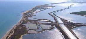 Languedoc : le réchauffement climatique et ses effets dans leslagunes