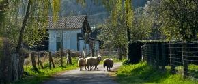 Normandie : la filière viande, un moteuréconomique