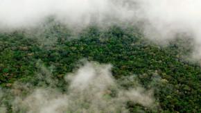 Déforestation dans le monde : en diminution ou non?