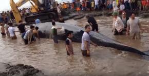 Vietnam : Hécatombe mystérieuse de poissons et debaleines