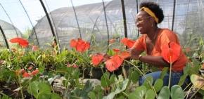 France : Une agriculture ultramarine victime de sessingularités