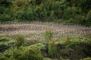 Réchauffement : Viticulture… en Patagonie chilienne!