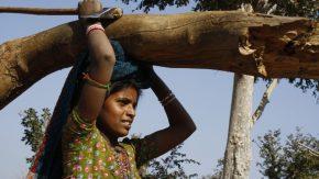 Inde : Déforestation irréfléchie au nom dudéveloppement