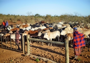 Kenya : La guerre despâturages